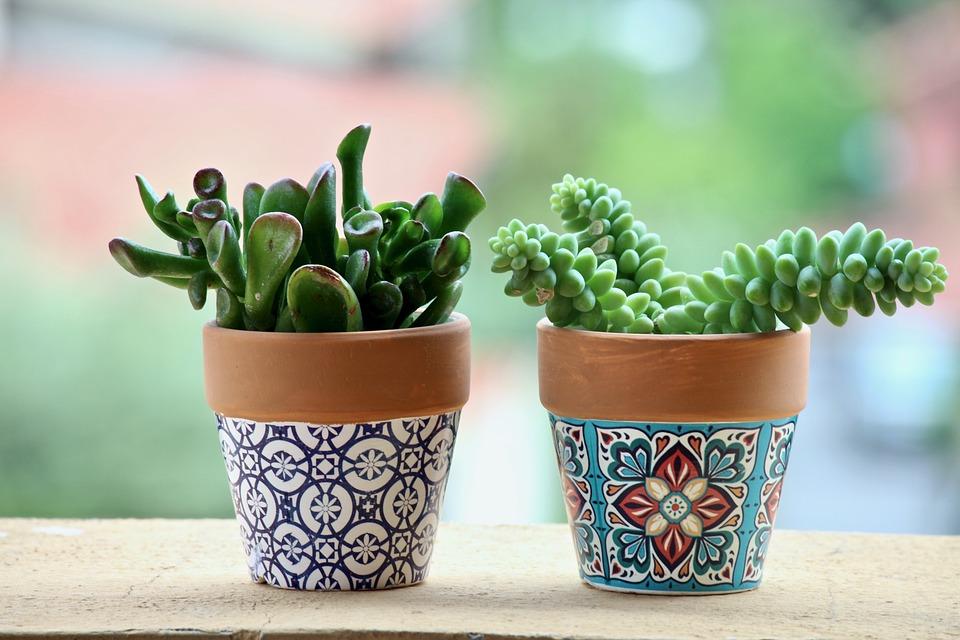 Décorer avec des plantes succulentes un espace qui manque de verdure